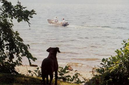 Molly watching Dad and Ev leave Maine 1997