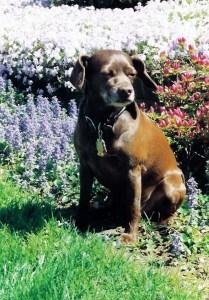 Molly among flowers NJ