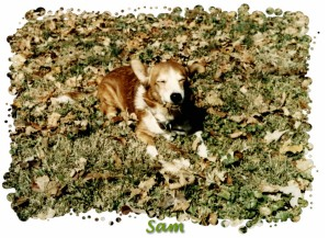 Sam in the Leaves